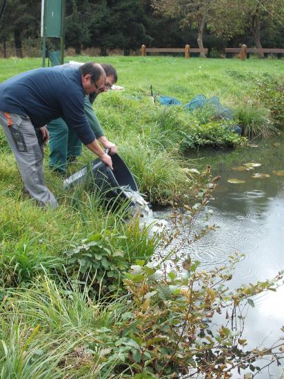 ré-empoissonnement de l'étang été 2010